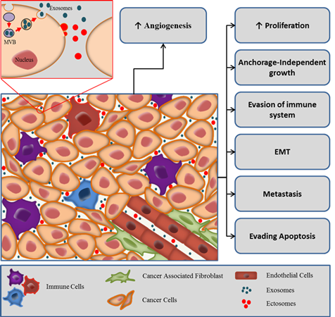 Exosomes in tumor microenvironment; EVs in tumor microenvironment
